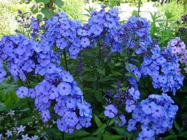 Многолетние цветы на все лето